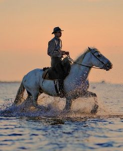 montura de caballo04